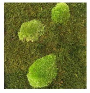 Naturador® | vertikale Gärten - Begrünungsarten