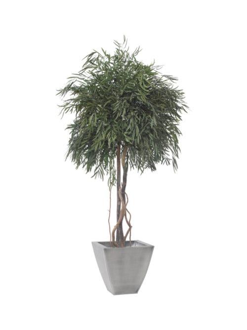 Eukalyptus Nicoly Kronenbaum 200 cm