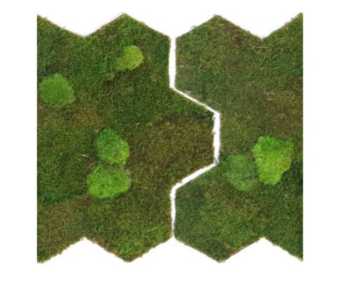 Flexgreen Wald- und Kugelmoos
