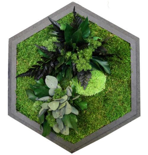 Hexagon Pflanzeninseln