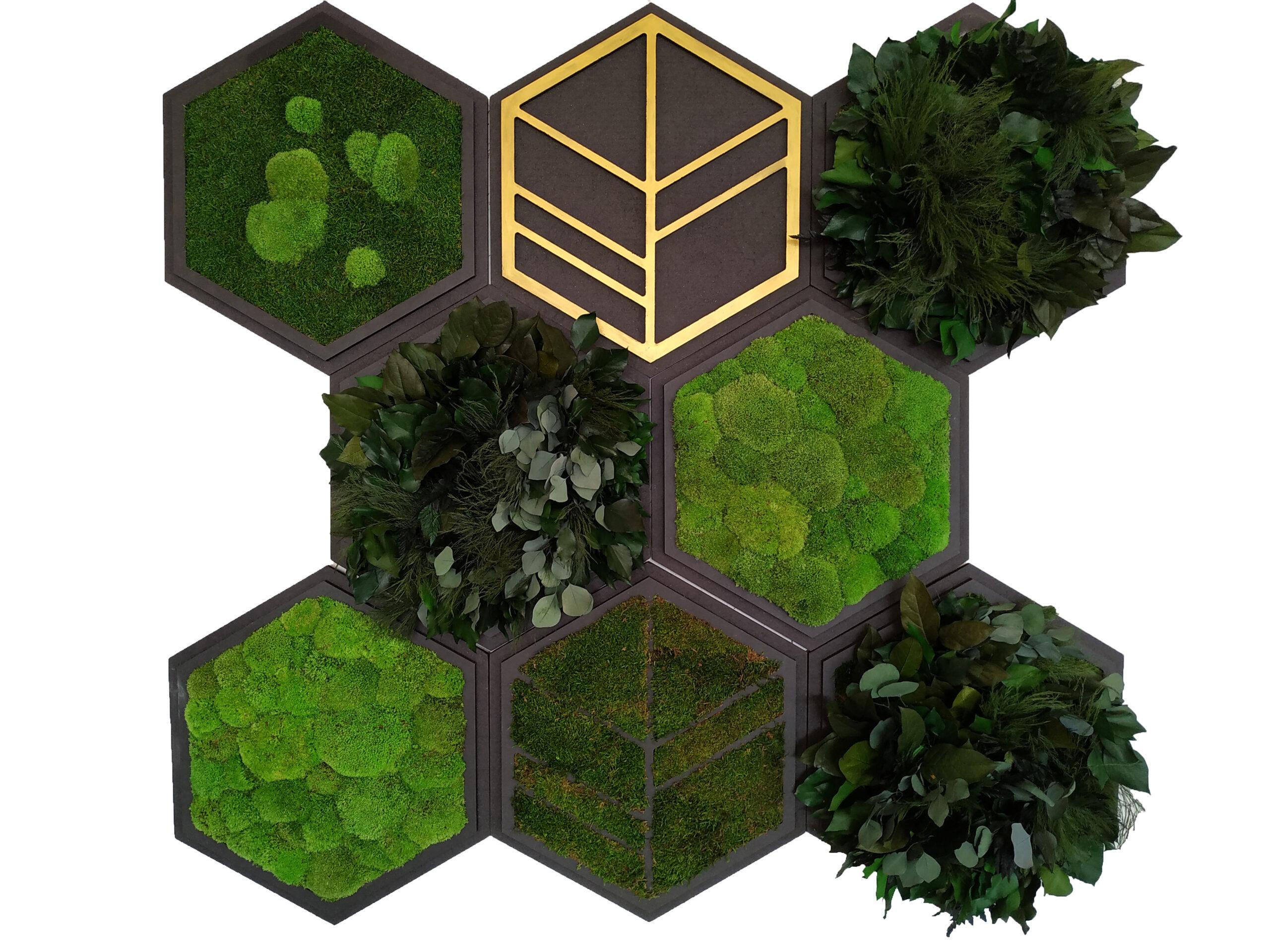 Hexagons verschiedene Begrünung