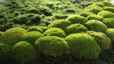 NATURADOR lebendige Mooswand - echtes Moos