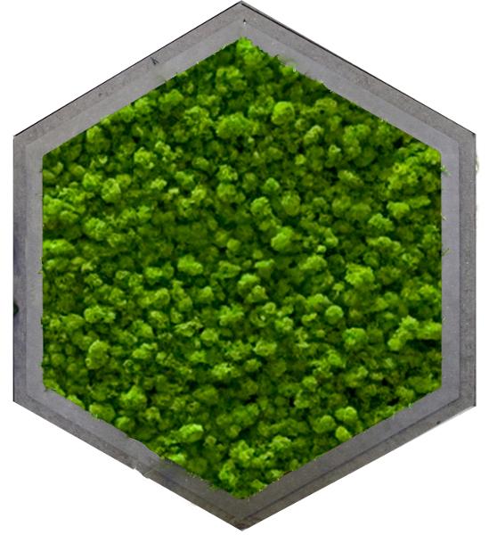 Hexagon Islandmoos
