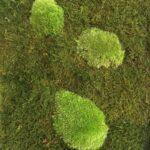 NATURADOR® Mooswand Wald- und Kugelmoos