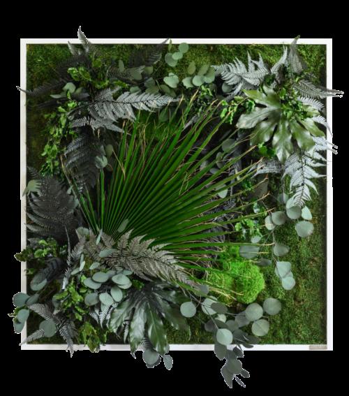 Pfanzenbilder im Dschungeldesign 80x80