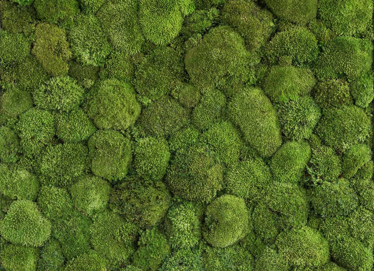 Naturador® | vertikale Gärten